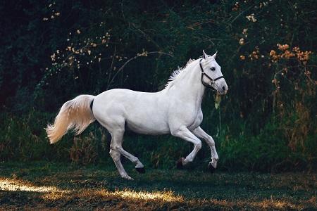 ما اسم صوت الحصان
